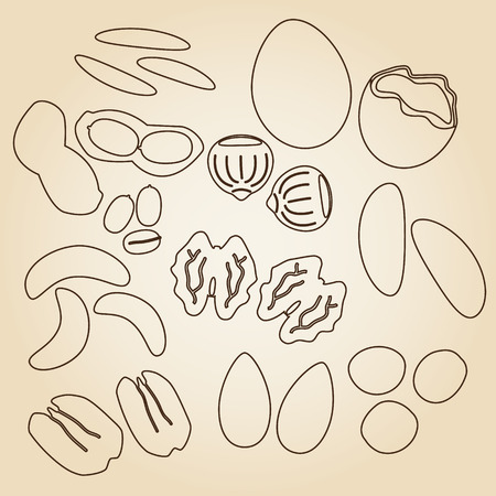 pecan: various nuts types brown outline icons set