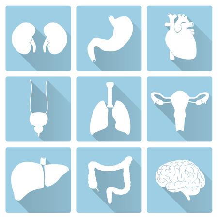 aparato respiratorio: �rganos del cuerpo humano internas planas iconos azules y blancas eps10