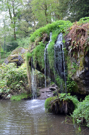 vegetation: small waterfall and vegetation
