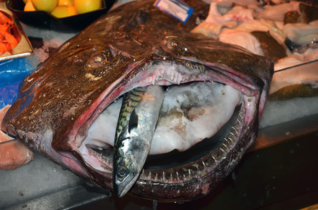 ugly mouth: ugly fish with big mouth and small fish inside on the table of local fish market