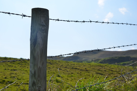 stake: wooden stake with barbed wire boundary of pasture