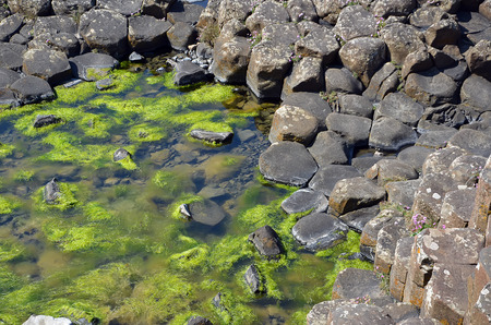 causeway: part of Giant Causeway with rocks and seaweed in the water in Ireland Stock Photo