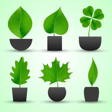simple nature leaf of tree in pot colorful icons Illustration