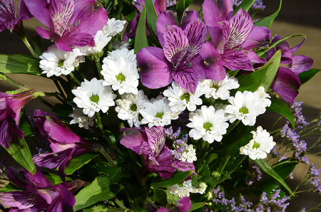 color photography: purple and white bouquet flower color photography