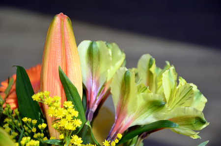 detail of multicolor beaty flower bouquet photography