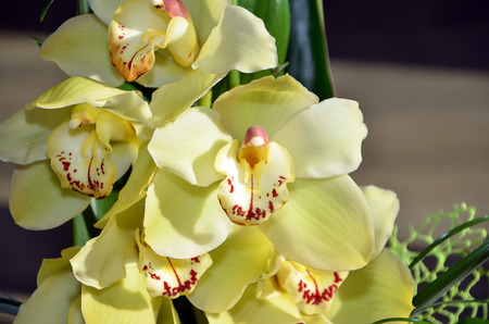 color photography: detail of yellow orchid flower in vase color photography