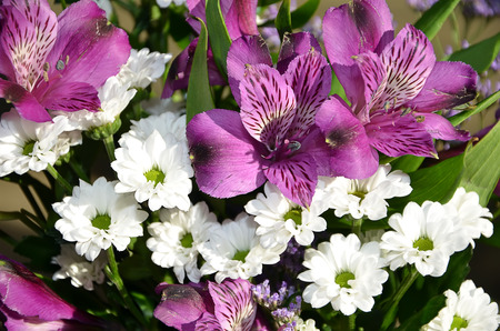 color photography: detail of purple and white bouquet flower color photography Stock Photo