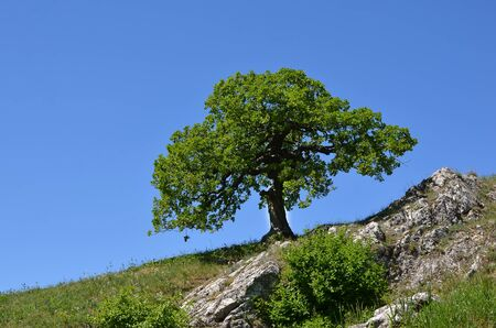 small tree on the hill landscape photography