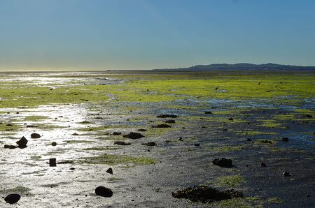 sunny morning Dublin Bay in Sandymount Irishtown Nature Park 版權商用圖片