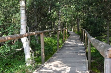wooden bridge over peat bog and swamp tourist path