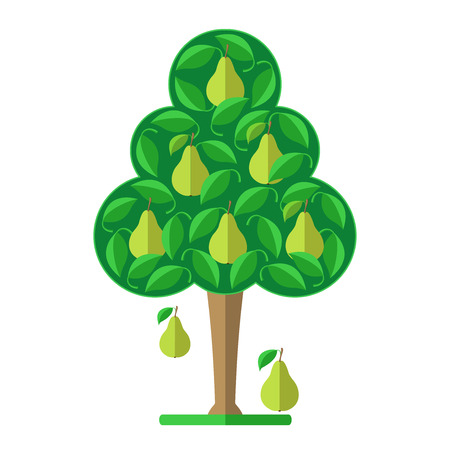 pear tree: Pear tree. Flat design. illustration. Illustration
