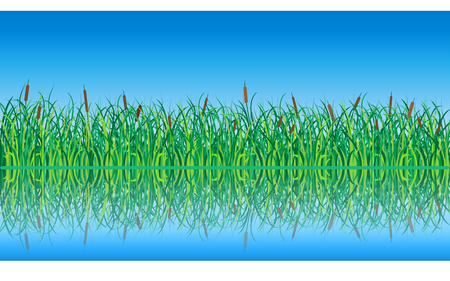 Grass and Reeds with Reflection in the Water. Illustration. Illustration