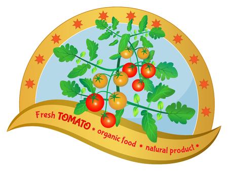 Tomato plant. Organic vegetable product. Design label. Vector illustration.