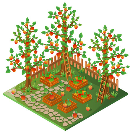 ladder  fence: Orchard. Autumn harvest of apples. 3D isometric view. Vector illustration.