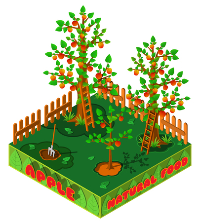 Apple harvest. Country garden in autumn. 3D isometric view. Vector illustration.