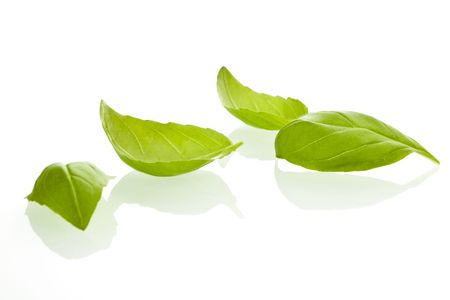 Fresh basil leaves on white background. photo