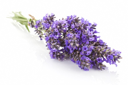 lavandula: Lavandula bunch bound with brown string isolated on white background. Aromatic herb background. Stock Photo