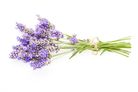 Lavender bunch bound with brown string isolated on white background.