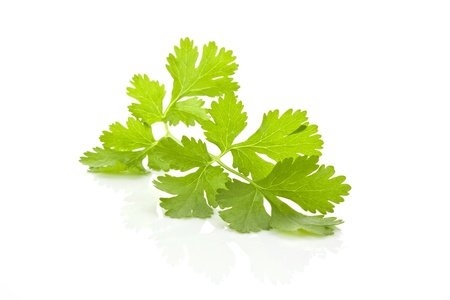 Fresh organic surowy liść kolendry samodzielnie na białym tle. Culinary aromatyczne zioła.