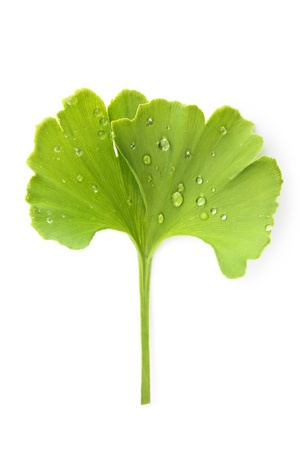 holistic view: Fresh green ginkgo biloba leaf with dew drops isolated on white background, top view. Healthy lifestyle concept.