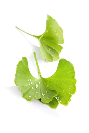 Ginkgo biloba blad met water druppels geïsoleerd op witte achtergrond met reflectie. Alternatieve geneeskunde concept. Stockfoto