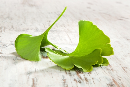 Fresh ginkgo biloba leaves isolated on white wooden textured background. Traditional natural alternative medicine. photo