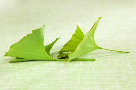 Ginko leaf isolated on green background. Natural supplement. Healthy living. photo