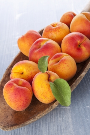 apricot kernels: Fresh ripe apricots on wooden plate on blue wooden background. Fresh fruit, rustic country style.