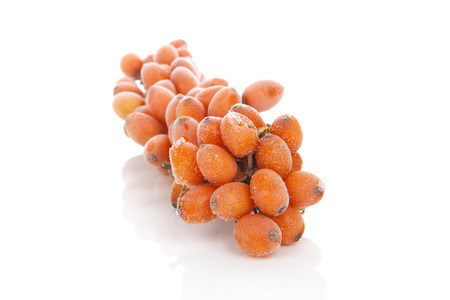 seabuckthorn: Sea-buckthorn twig with frost on berries isolated on white background Stock Photo