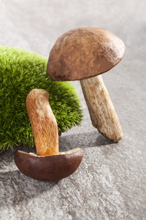 fungous: Couple of delicious fresh mushrooms with moss on natural stone background Stock Photo