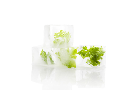 Parsley and basil frozen in ice cubes isolated on white background. Culinary cooking herbs. photo
