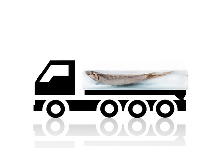 frozen fish: Fresh anchovy fish frozen in ice block on cooling truck isolated on white background. Fresh seafood transportation background. Fresh fish.