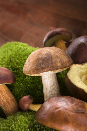 mushroom picking: Fresh delicious mushrooms with moss on brown wooden background. Seasonal mushroom picking.