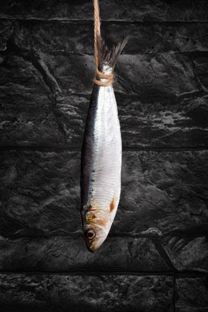 anchovy fish: Fresh anchovy fish hanging on string against black background. Culinary seafood eating. Drying fish.