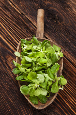cornsalad: Fresh green field salad on old wooden spoon on rustic vintage wooden background. Fresh salad, rustic vintage country style image. Stock Photo