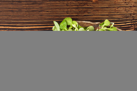 rapunzel: Fresh green field salad on wooden spoon on old wooden vintage background. Fresh salad, rustic vintage country style image. Stock Photo
