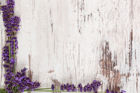 Lavender on white wooden antique textured background, top view