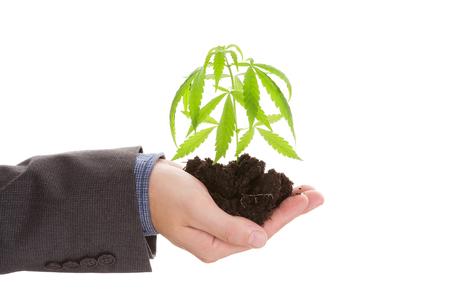 Blanke knappe man in pak bedrijf jonge cannabis plant met bodem in zijn hand op een witte achtergrond