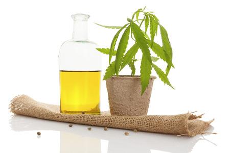 Cannabis olie en jonge cannabis plant op een witte achtergrond. Stockfoto