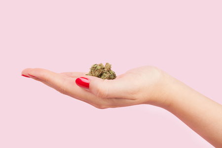 Cannabis bud in female hand with red fingernails isolated on pink background