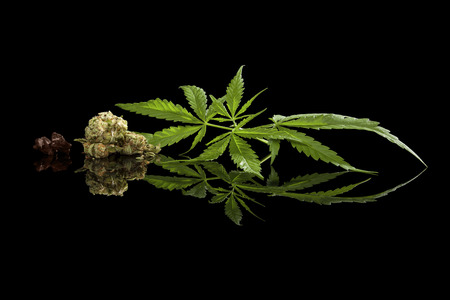 hashish: Cannabis leaves, bud and hashish isolated on black background. Alternative medicine.
