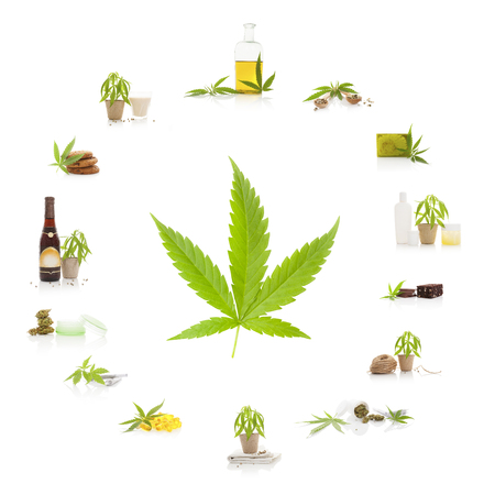 cannabis leaf: Cannabis and its usage. Marijuana leaf and marijuana products isolated on white background. Cosmetics, hemp milk, hemp oil, cookies, brownies and nutritional supplements.