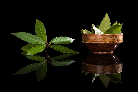 Fresh and dry bay leaves isolated on black background. Culinary herb, cooking ingredient and medical herb.