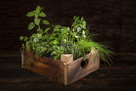 herb garden: Various herbs in wooden vintage crate. Culinary aromatic herbs, basil, coriander, mint, rosemary, thyme and chive.
