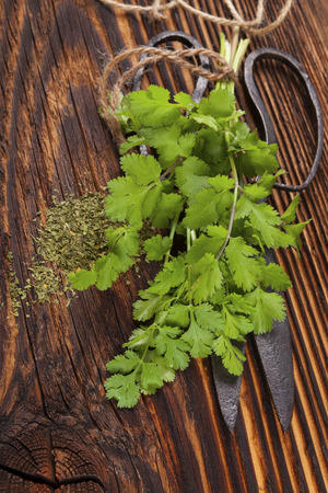 kulinarne: Fresh cilantro on wooden table. Culinary aromatic herbs.