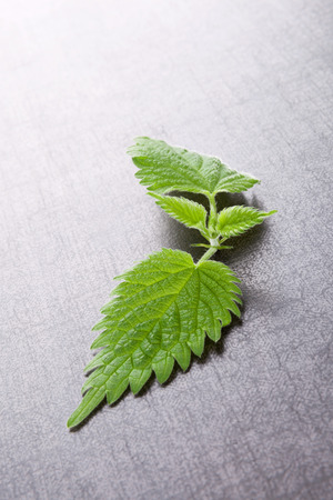 stinging  nettle: Fresh stinging nettle leaves on black stone background. Natural alternative medicine, healthy lifestyle.
