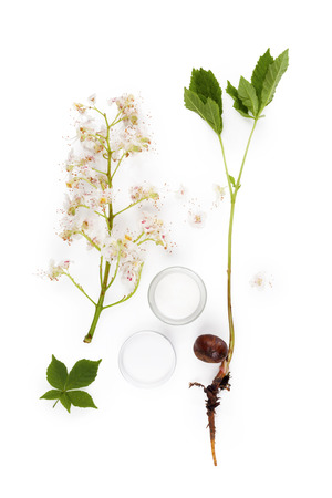 horse chestnut seed: Horse chestnut background. Seed, leaves, flower and cosmetics isolated on white background. Healthy natural organic cosmetics and remedy.