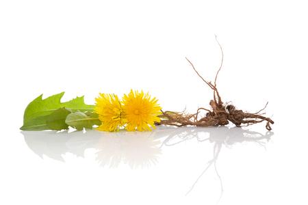 Paardebloem achtergrond, kruidengeneesmiddel. Paardebloem bloem, bladeren en wortel geïsoleerd op een witte achtergrond. Stockfoto