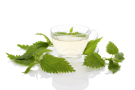 stinging  nettle: Stinging nettle herbs and tea. Fresh nettle leaves and organic hard soap. Healthy natural cosmetics.
