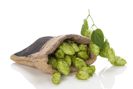 brewery: Hop fruit in burlap bag isolated on white background.